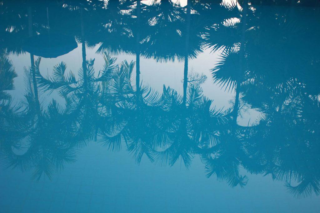 Palme riflesse sull'acqua