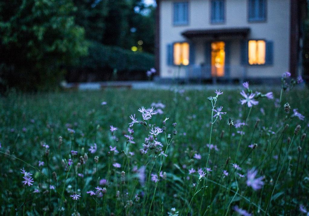 Particolare di giardino casalingo